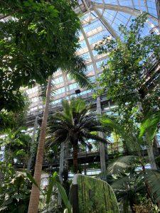 Field Trip at the Botanic Garden